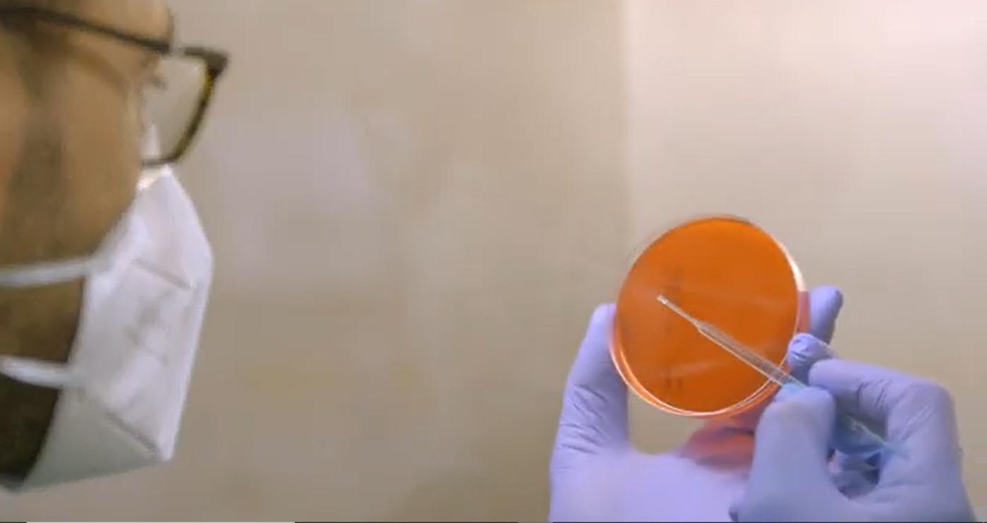 Un caso de éxito de ciencia ciudadana: ciencia y sociedad colaboran para luchar contra listeria